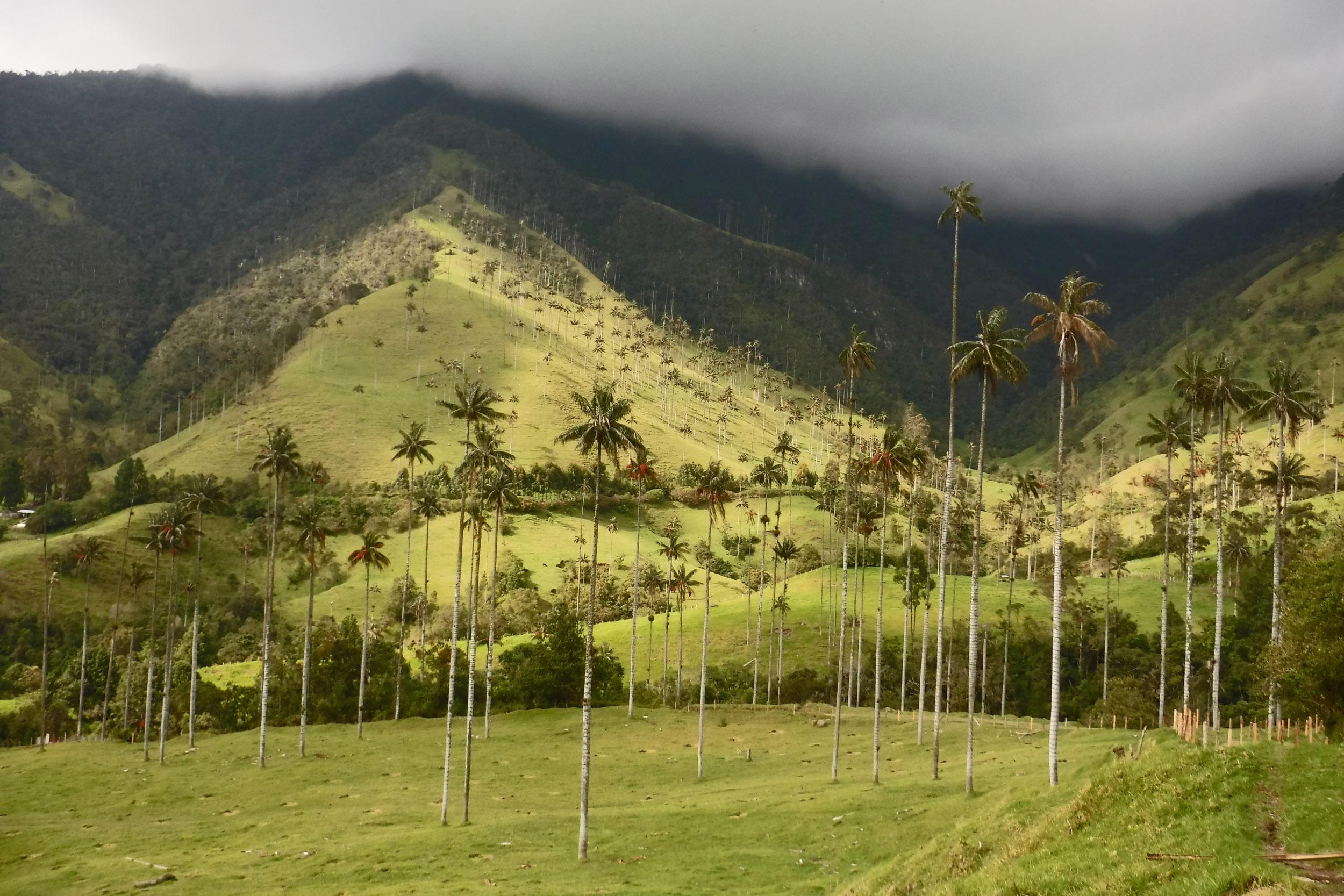 Colombia Valle De Cocora2.katka